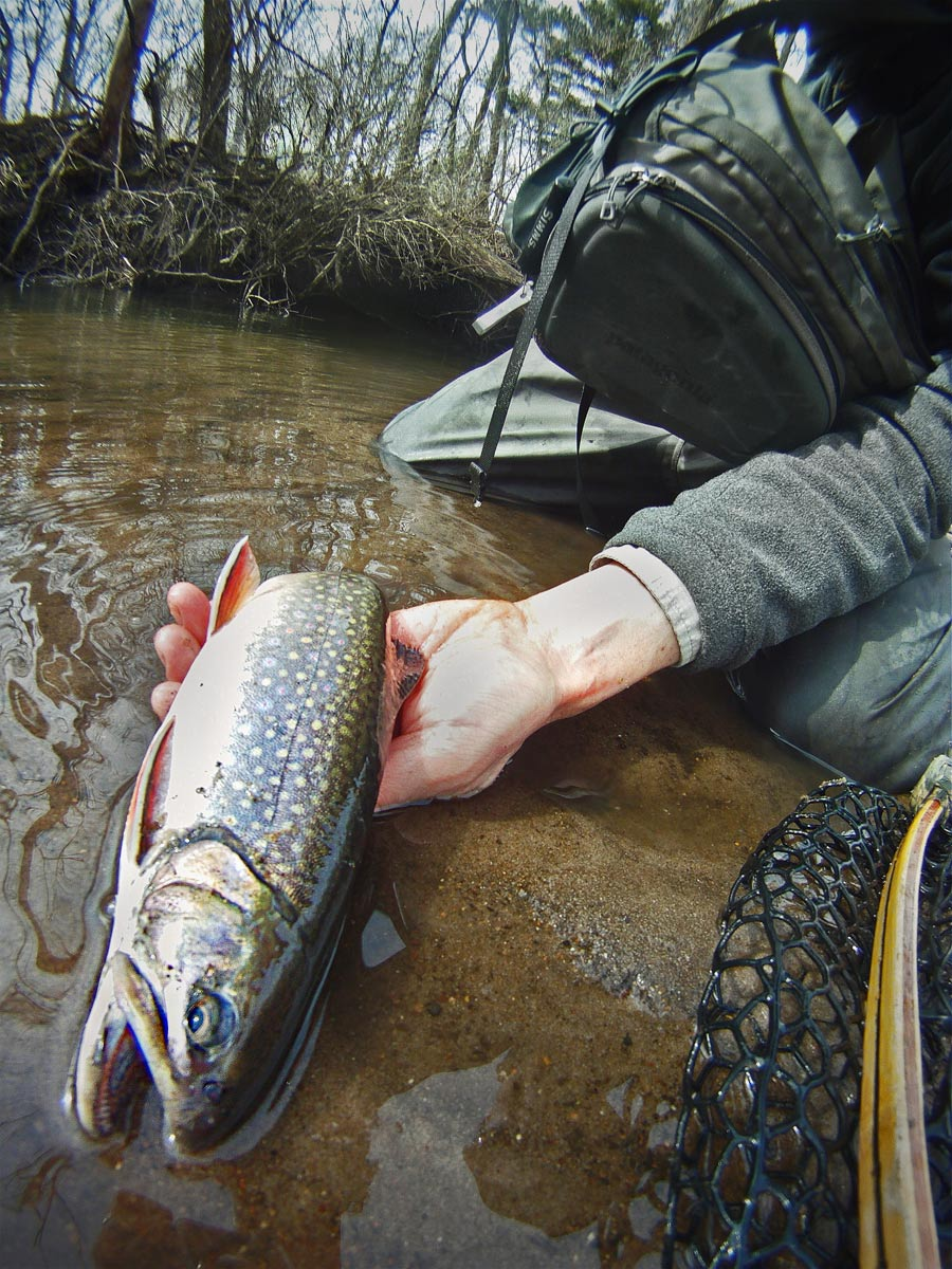 adrift_fly_fishing_labor_graphic_design_minneapolis_andy_weaverling_brook_trout_11