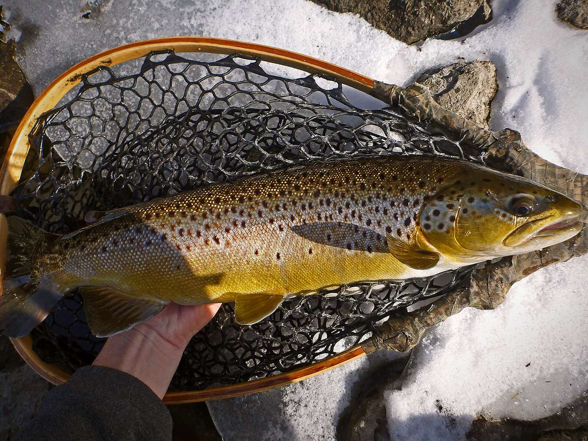 adrift_fly_fishing_labor_graphic_design_minneapolis_andy_weaverling_driftless_trout_winter_01