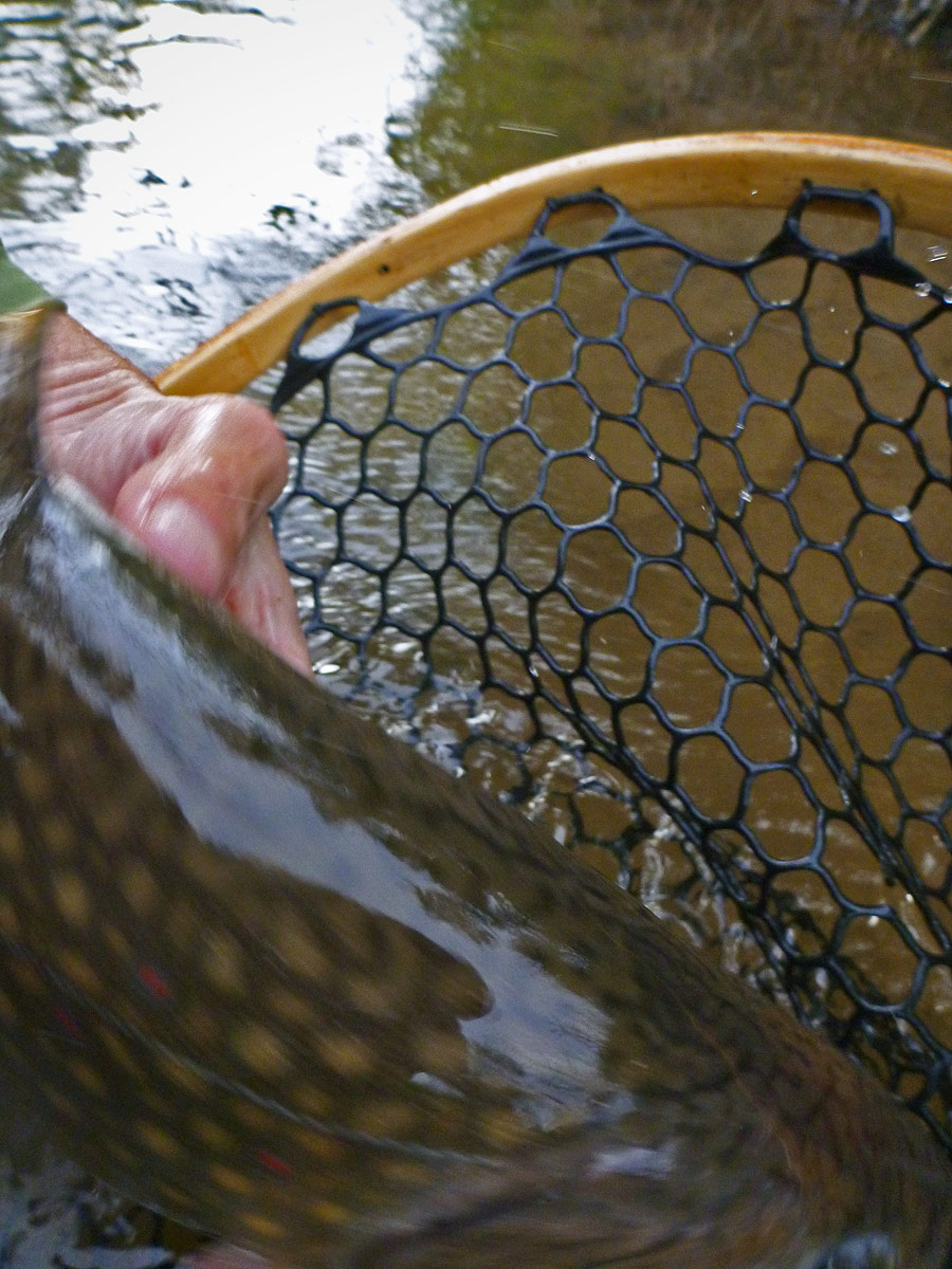 adrift_fly_fishing_labor_graphic_design_minneapolis_andy_weaverling_driftless_trout_15