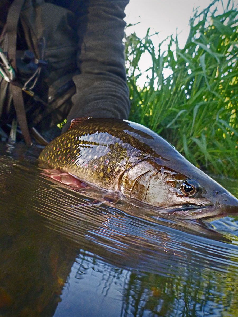 adrift_fly_fishing_labor_graphic_design_minneapolis_andy_weaverling_driftless_trout_24c
