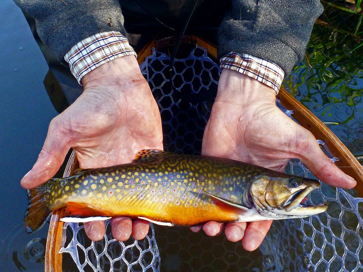 adrift_fly_fishing_labor_graphic_design_minneapolis_andy_weaverling_driftless_brook_trout_10