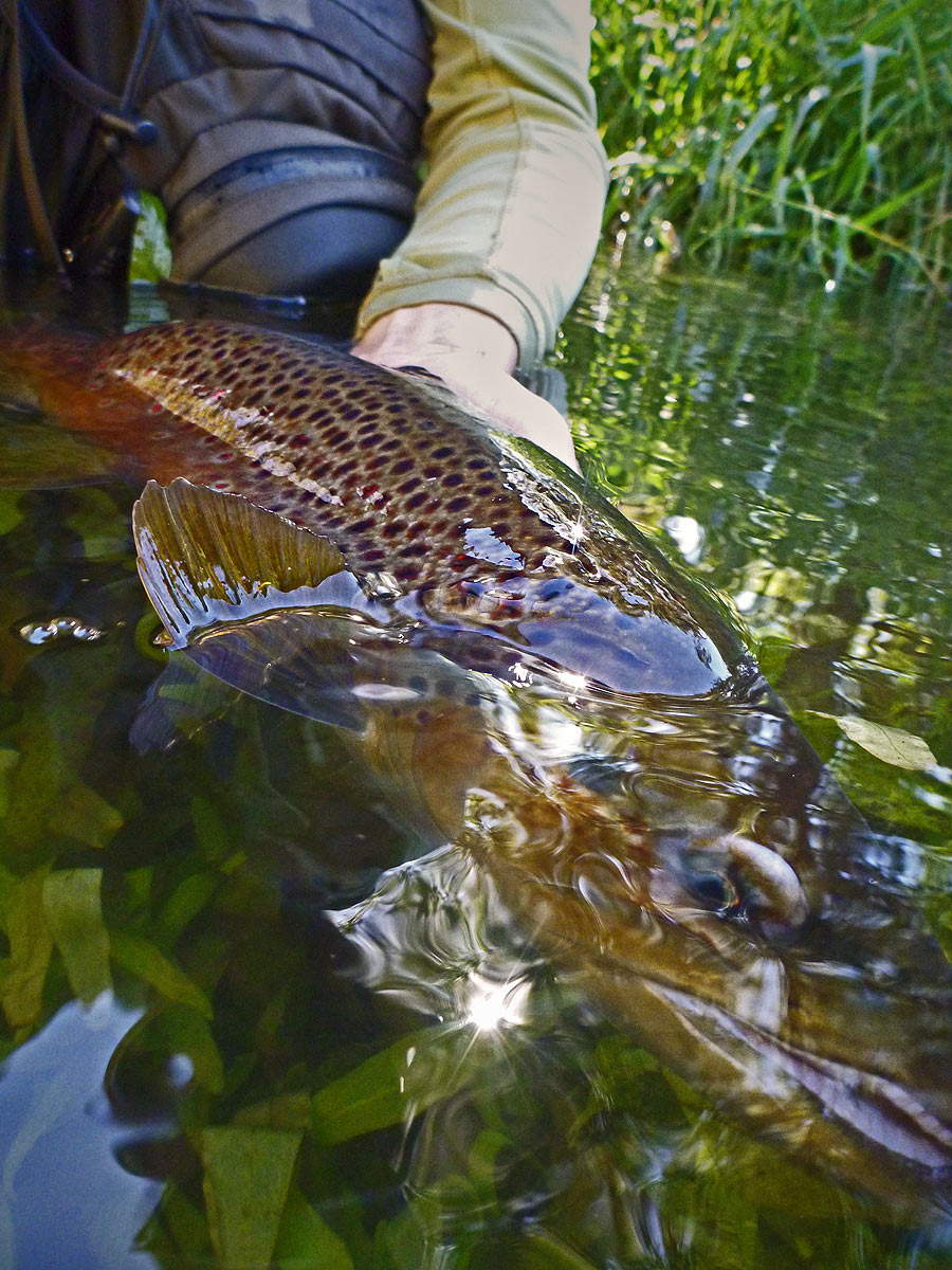 adrift_fly_fishing_labor_graphic_design_minneapolis_andy_weaverling_driftless_brown_trout_02