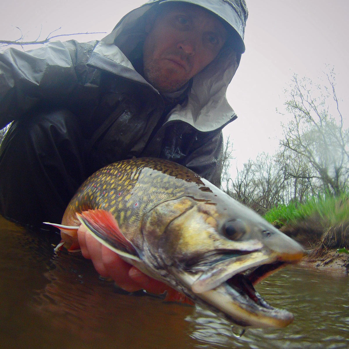 adrift_fly_fishing_labor_graphic_design_minneapolis_andy_weaverling_driftless_big_brook_trout_04e